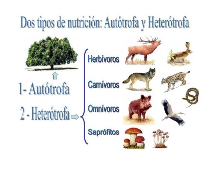 Nutrición Autótrofa Y Heterótrofa 6 Tomi Digital