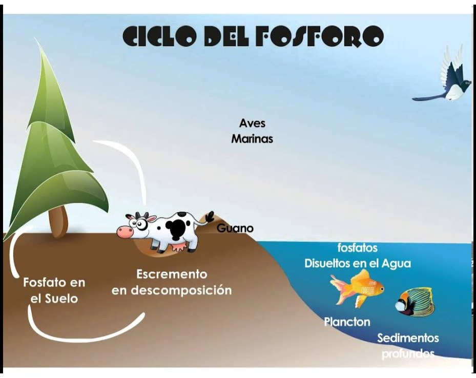 Ciclo Del Fósforo Tomi Digital