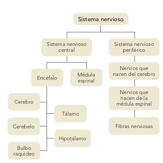 El Sistema Nervioso Tomi Digital