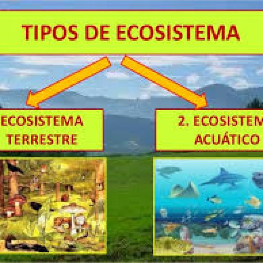 Ecosistemas Ciencias 6 Tomi Digital